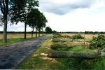 Aleja w trakcie wycinki Mikolajki–Woźnice 2005