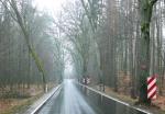 Dłużek - oznaczenie drzew przy jezdni