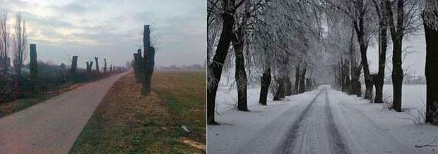 Wycięta aleja lipowa, przed i po wycince. Fot. dzialdowo.wm.pl