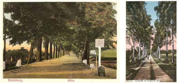 Mrągowo – aleja przy szosie wylotowej do Kętrzyna i aleja brzozowa przy polnej drodze, Kruklin, powiat giżycki. Ze zbiorów W. Kujawskiego