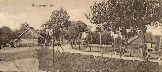 Młode drzewa posadzone przy wiejskiej drodze, Śwignajno, dawniej pow. mrągowski (obecnie pow. piski). Ze zbiorów W. Kujawskiego