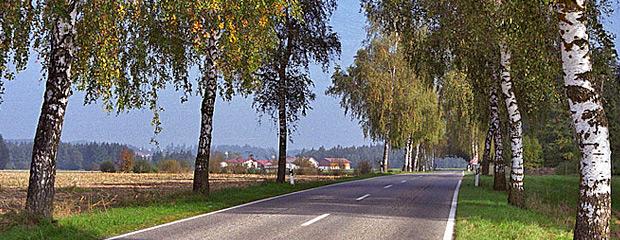 Dolna Bawaria, aleja Brzozowa. Fot. K. Worobiec