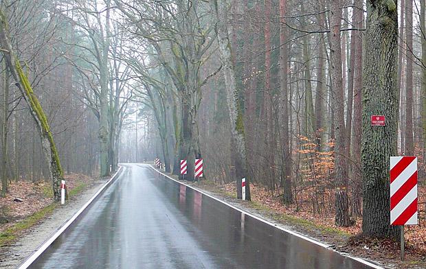 Takie tablice nawet w mglisty dzień ostrzegają przed drzewami rosnącymi blisko jezdni – Dłużek. Fot. K. Worobiec