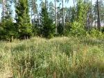 Piskorzewo – teren cmentarza