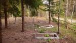 Przerośl – cmentarz po oczyszczeniu