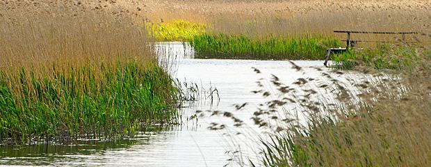 Rzeka Krutynia Fot. B.Dal