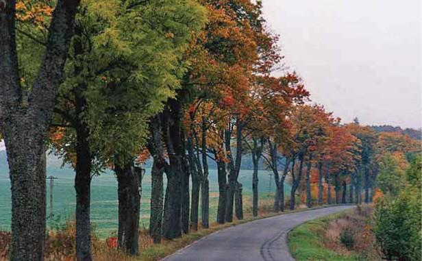 Jednostronny szpaler też jest ozdobą krajobrazu, droga do Łężan, pow. kętrzyński. Fot. K.Worobiec