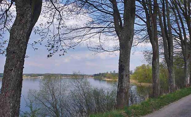 Drzewa przydrożne chronią wysoką skarpę przed erozją, a pojazdy przed wypadnięciem z drogi. Rusek Wlk, pow. szczycieński. Fot. K.Worobiec
