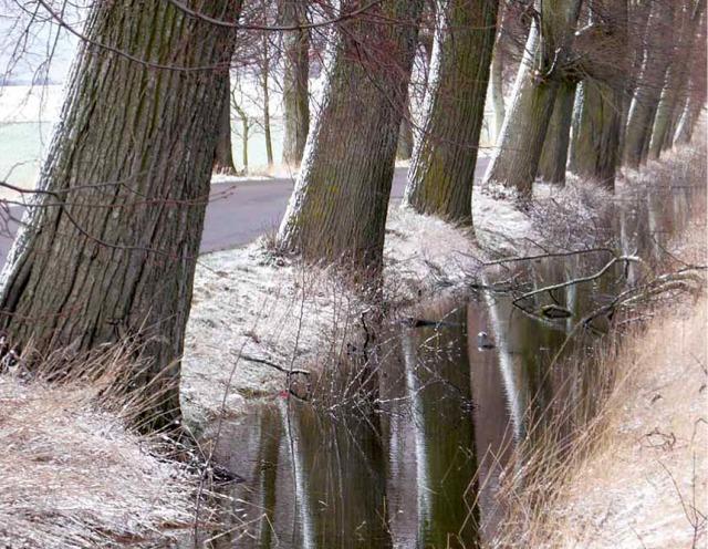 Korzenie drzew przydrożnych stabilizują grunt i regulują stosunki wodne, okolice Reszla. Fot. K. Worobiec.