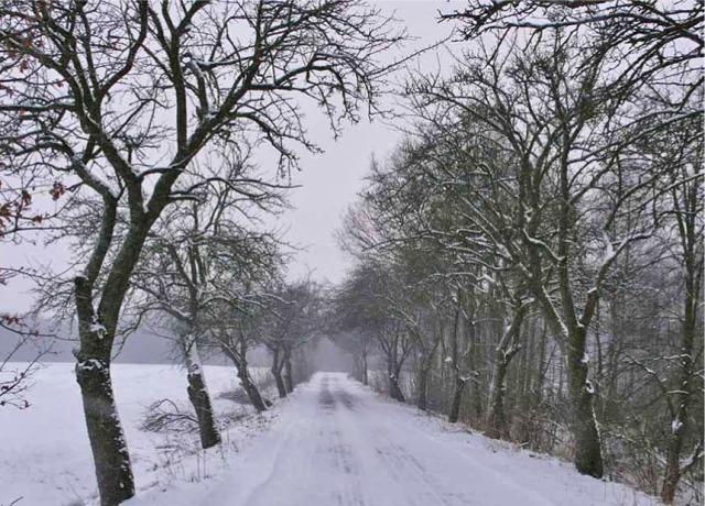 Drzewa owocowe rzadko zachowały się przy drogach Warmii i Mazur – jabłonie w pow. bartoszyckim. Fot. K. Worobiec.