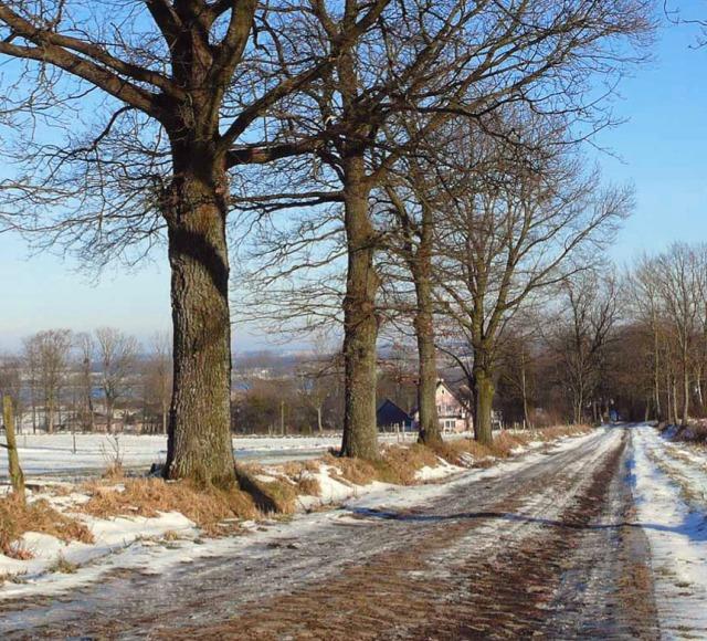 Brukowana aleja koło Srokowa Fot. K. Worobiec