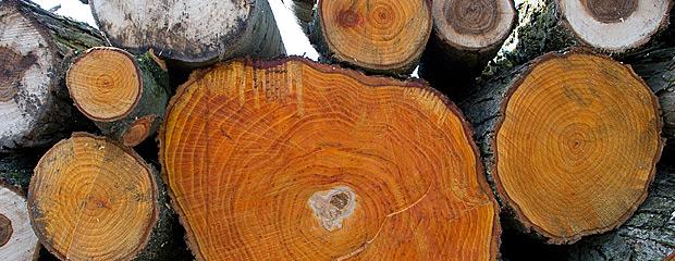 Drewno po wyrębie. Fot. Beata Dal
