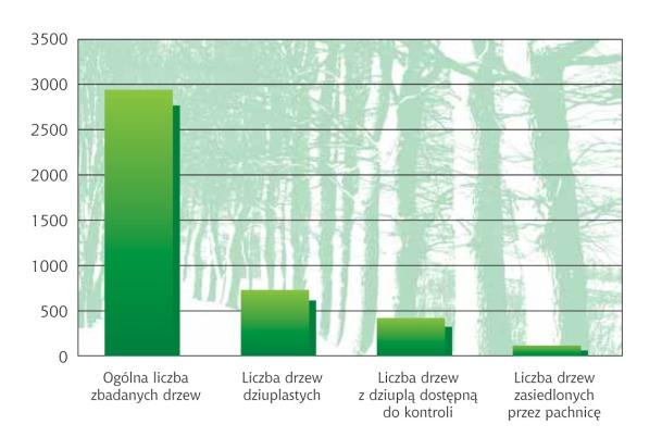 Liczba drzew zasiedlonych przez pachnicę w stosunku do liczby drzew dziuplastych i ogólnej liczby zbadanych drzew.
