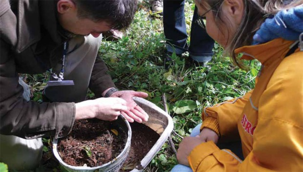 Przesiewanie murszu pobranego z dziupli drzew w poszukiwaniu śladów bytności pachnicy dębowej (Fot. K. A. Worobiec)