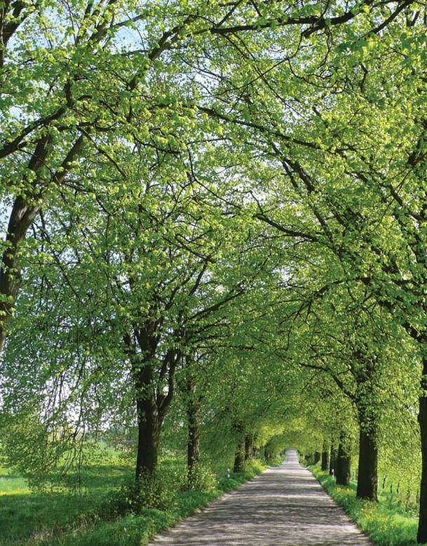 Świeża zieleń lipowej alei, Giżycko – Woźnice (Fot. K. A. Worobiec)