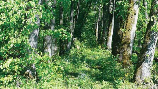 Bogata flora towarzysząca rośnie wzdłuż alei rzadziej uczęszczanych (Fot. K. A. Worobiec)