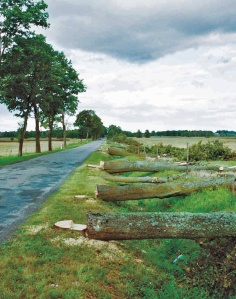 Od 2004 roku aleje w całej Polsce są zagrożone masową wycinką, okolice Mikołajek (Fot. K. A. Worobiec)