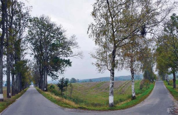 Rozstaje dróg – aleja jesionowa prowadzi do pałacu w Łężanach, brzozowa – do wsi, Leginy, pow. kętrzyński (Fot. K. A. Worobiec)