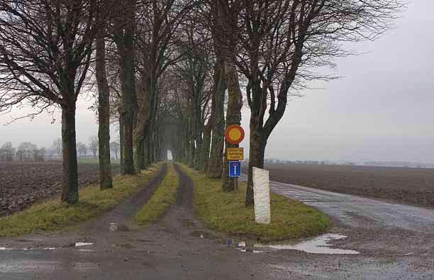 Szwecja – nowa droga wybudowana obok alei (Fot. T. Oszmian)