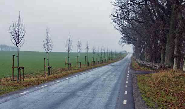 Szwecja – nowe nasadzonia drzew w celu odtworzenia alei (Fot. T. Oszmian)
