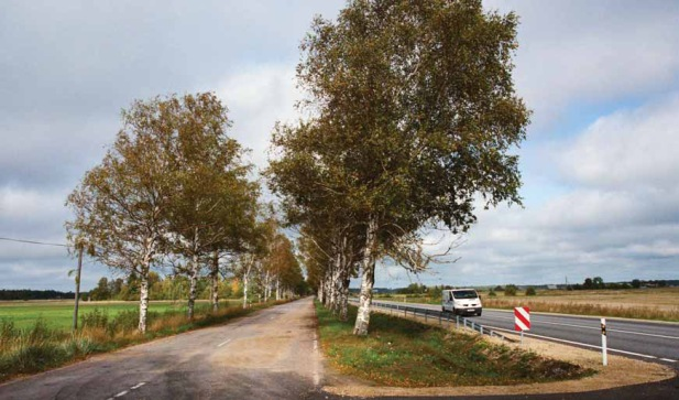 Łotwa – aleja pozostała dla ruchu lokalnego, ruch tranzytowy odbywa się jezdnią tuż obok (Fot. K. A. Worobiec)
