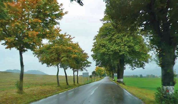 Czechy – po lewej stronie drogi nasadzono drzewa w celu odtworzenia alei (Fot. D. Worobiec)