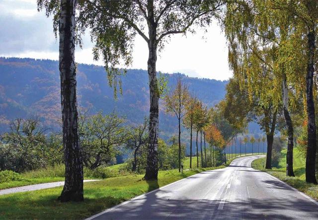 Niemcy – w Dolnej Saksonii (Niedersachsen) drzewa sadzi się tuż obok jezdni by odtworzyć aleję oraz oddzielić ścieżkę rowerową od drogi (Fot. K. A. Worobiec)