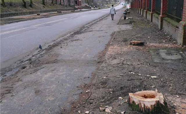 Przy drodze Kętrzyn – Bartoszyce wycięto 4105 drzew (!), także rosnące tuż przy ogrodzeniu, Kętrzyn 2007 r. (Fot. K. A. Worobiec)