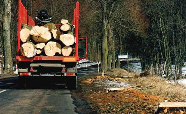 Drzewa, które trafią do tartaku. ładowane są mechanicznie na samochody do przewozu dłużycy, Giżycko 2005 r. (Fot. K. A. Worobiec