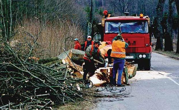 Drzewo przydrożne przerabiane na drewno opałowe – na miejscu wycinki jest cięte na małe kawałki, wygodne do ręcznego załadunku, okolice Lubawy 2006 r. (Fot. D. Worobiec)
