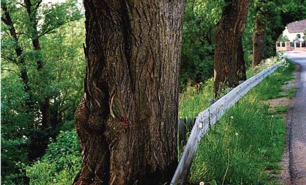 Zamiast wycinać drzewa, należy ustawiać barierki energochłonne. Ta metoda sprawdziła się doskonale m.in. w Niemczech (Fot. K. A. Worobiec)