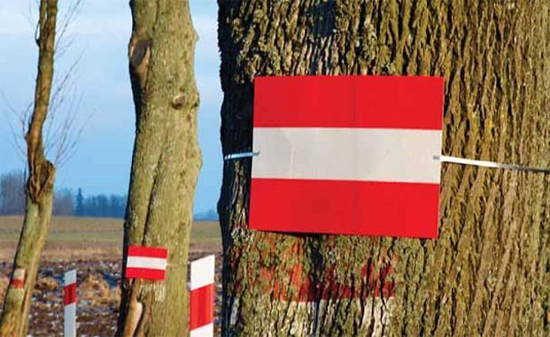 Drzewa można oznaczać tablicami odblaskowymi (Fot. K. A. Worobiec)