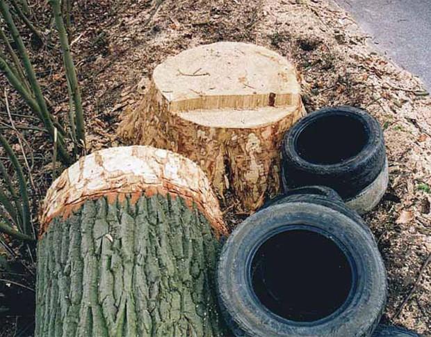 Zużyte opony samochodowe używane są do wypalania karp i gałęzi ściętych drzew (Fot. K. A. Worobiec)